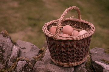 Eggs in basket on wall