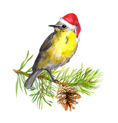 Bird in red santa hat on christmas tree. Water color