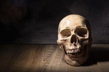 skull still life on wooden board
