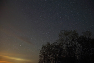 The stars of a summer night shot against a silhouette of a some trees.