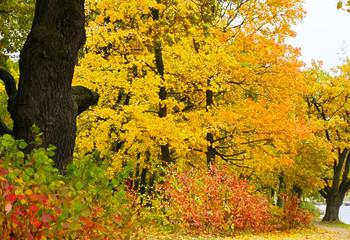 Canvas Prints Autumn Autumn