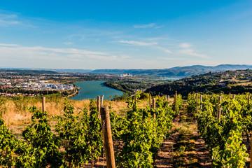 Vignes et vallée du Rhône vu des hauteurs de Condrieu