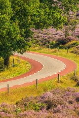 Blooming heathland with road at the Dutch Veluwe national park