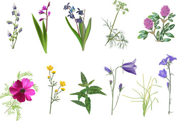 set of eleven wildflowers collection isolated on white