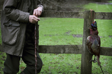 A man, on a pheasant shoot, leaning against a fence holding a beater's thumbstick with a cock pheasant bird carcass hanging on the post.