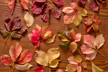 leaves of thicket creeper over wood background