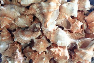 texture seashells