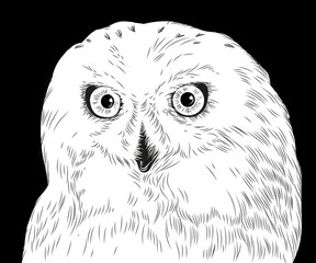 hand drawn owl portrait