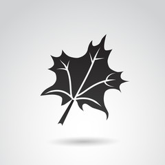 Autumn leaf VECTOR icon.