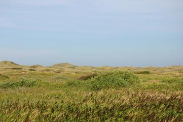 Skagen, Nordspitze Dänemarks, Dänemark, Dünen, Gras