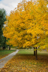 Autumn trees, yellow leaves on trees, autumn landscape, autumn p