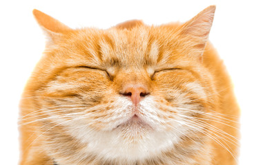 Proud ginger cat is lying