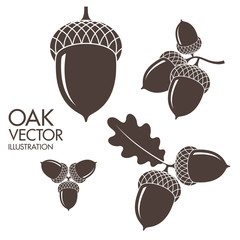 Oak. Isolated acorns on white background
