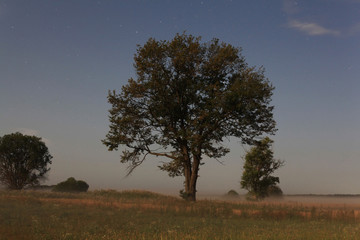 lonely tree in the field landscape