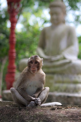 Monkey sitting on garden stone with statue of Buddha at background