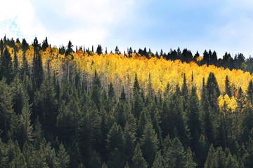 Wall Mural - Mountain Autumn Colors