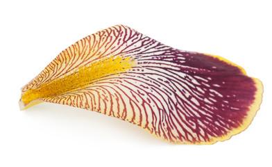 Iris petal