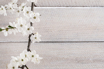 Cherry blossom on wooden background