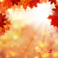 Autumn Background with Maple Leaves and Sun Ligth. Abstract Fall