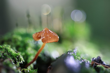 poisonous mushrooms in the forest