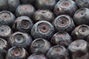 Lot of unfrozen blueberries. Macro view. Close-up.