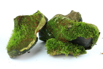 Moss Shoes