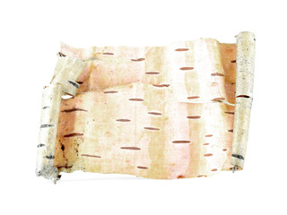 Birch bark scroll isolated on white background