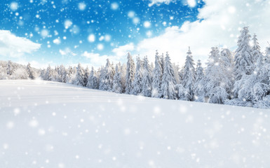 Wall Mural - Winter snowy landscape