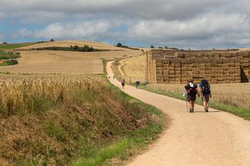Walking through the grain fields near Ciruena on the Camino de Santiago Wall mural