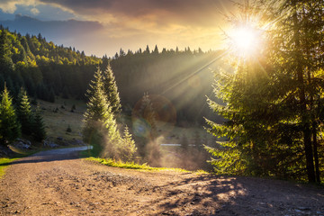 Empty gravel mountain road near the coniferous forest with cloudy sky in morning light