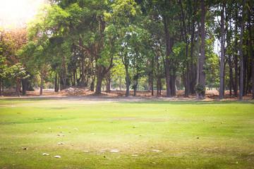 Green park of Chiang Mai, Thailand