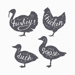 Set of hand drawn hipster style farm birds silhouettes. Chicken