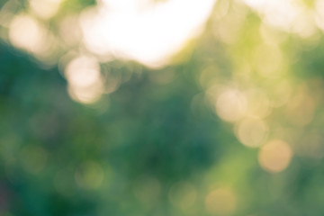 Out of focus natural  bokeh background