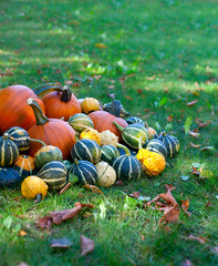 colorful pumpkins on grass