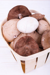 edible mushrooms on white wooden background