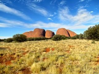 Australia Outback Olgas trees and bushes