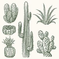 Wall Mural - Hand drawn vector cactus