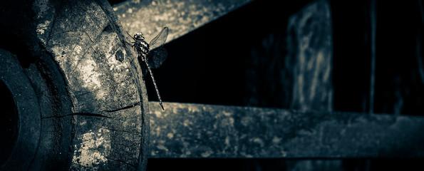 Libelula sobre rueda
