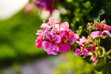 Various tropical flowers. Colorful background.