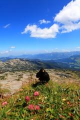 Alpendohlen im Hochgebirge