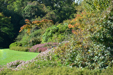 An English country garden in Autumn,/Fall