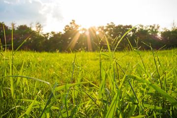 Green grass on a sunny meadow of city park