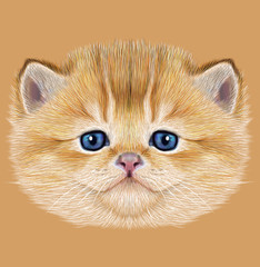 Illustrative Portrait of Domestic Kitten. Cute peach kitten with blue eyes.