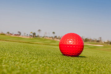 The red golf ball model with blurred golf course background.