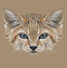 Sand cat animal face. Felis margarita. Illustrated African Asian cute wild sand dune kitten head portrait. Realistic fur portrait of desert kitty isolated on beige background.