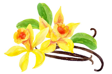 Vanilla flowers and pods