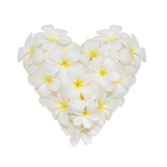 White plumeria flower decorated in a shape of heart on white background
