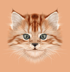 Illustrative Portrait of Domestic Kitten. Cute red tabby kitten.