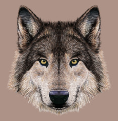 Illustration Portrait of a Wolf. Dark grey fur colour.