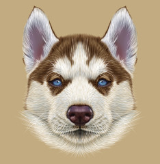 Illustrative Portrait of Husky Puppy. Cute portrait of young copper red bi-colour dog with pale blue eyes.